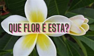 Teste: Que flor é esta? (2a. parte)