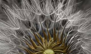 10 Fotos Microscópicas Premiadas