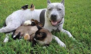 Amizades improváveis no reino animal
