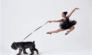 Bailarinos e Caninos vão para o palco - e arrasam!