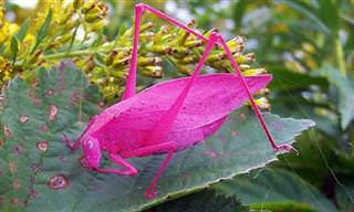 Animais Exóticos e Coloridos Que Enfeitam a Natureza!