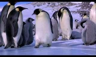 Os Desajeitados e Hilariantes Pinguins