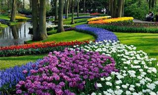 6 Jardins Que Valem Uma Visita!