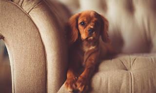 TESTE: Você Tem Obsessão Por Cachorros?