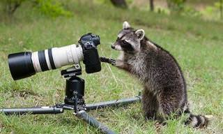 Quando Os Bichos Resolvem Ser Fotógrafos...
