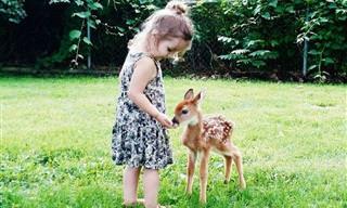 Animais Selvagens, os Nossos Melhores Amigos!