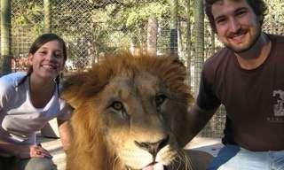 Abraçar um Leão? Só no Zoo de Luján...