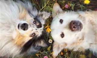 Você sabia? Cães também têm melhores amigos!