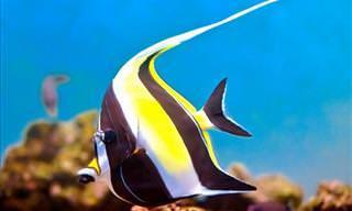 18 dos Mais Lindos Peixes do Oceano