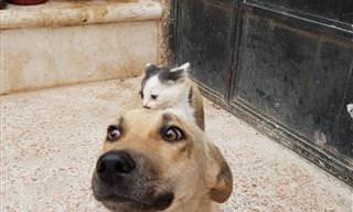 Amizade Entre Gatinha Órfã e Cadela de Luto