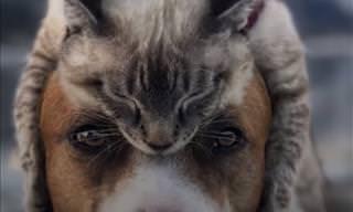Gato e Cão Viajam Para Todos os Lados Juntos
