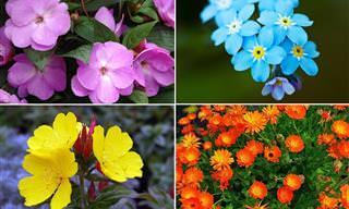 10 Flores que sobrevivem bem com pouca luz solar
