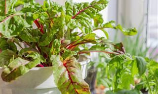 Cultive Frutas e Vegetais em Casa