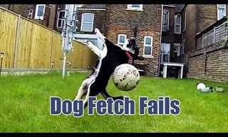 Alguns Cães Não Conseguem Buscar Nada...