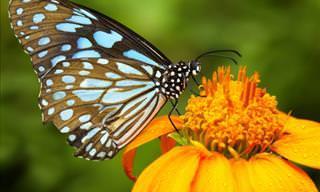 Belas Flores Que Têm o Dom de Atrair Borboletas
