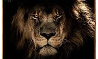 A impressionante  beleza de animais selvagens em 14 fotos