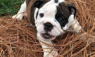 A Alegria Canina É Contagiante!