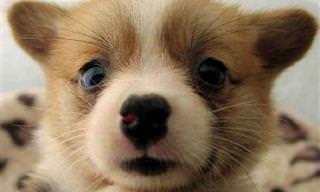 Estes Cãezinhos Vão Melhorar o Seu Dia!