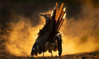 Imagens vencedoras do Audubon Photography Awards de 2021