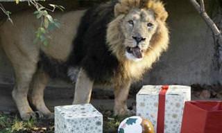 O Natal já chegou no zoológico de Londres