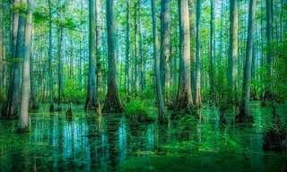 15 Florestas Espetaculares do Planeta