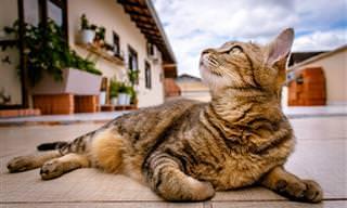 Por Que os Gatos se Comportam Assim?