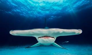 Concurso Anual de Fotografia Aquática: Edição 2018