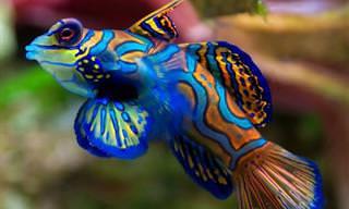Estes Peixes Lindos e Brilhantes São um Espetáculo aos Olhos
