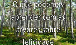 Aprenda a Ser Feliz Com as Árvores