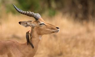 15 Fotos Mágicas de Animais na Natureza