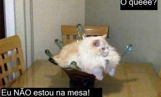 Oba, Mais um Dia de Gatos!