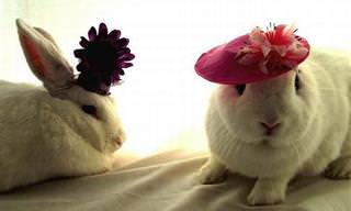 Coelhinhos Adoráveis Que se Esqueceram Que São Apenas Animais...