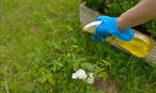 6 Pesticidas Ecológicos e Efetivos