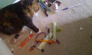 12 Gatos Que Adoram Colecionar Objetos