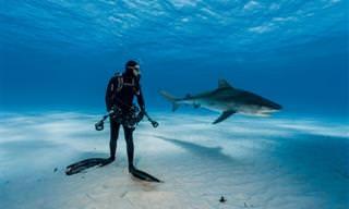 As Melhores Fotos do Ano da National Geographic São Espetaculares!