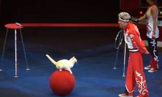 Você já viu os gatos do circo russo?