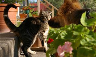 Você já viu cães e gatos fazendo amizade? É hilário!