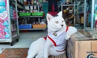 Quando os gatos parecem os donos do pedaço