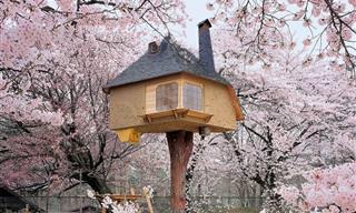 15 Impressionantes Casas na Árvore