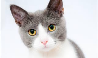 TESTE: Você Sabe Tudo Sobre Gatos e o Universo Felino?