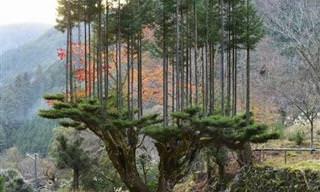 Depois de ver essas imagens, quero muito visitar o Japão!