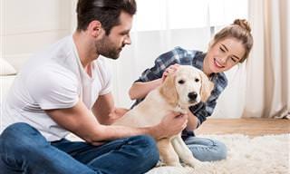 8 Dicas de Como Cuidar do Seu Cãozinho Com Artrose