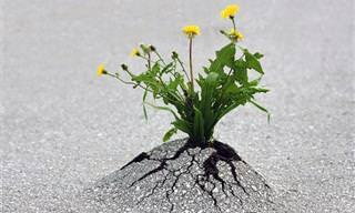 Essas Plantas São Um Exemplo Para Todos Nós Não Desistirmos!