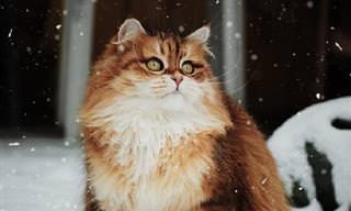 Quando os gatos posam para fotos, viram supermodelos!