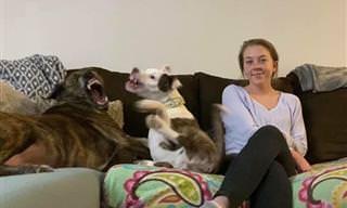 Cachorros acrescentam humor aos retratos de família