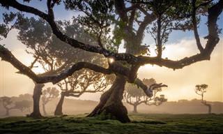 12 Imagens gloriosas da floresta de louros da Madeira