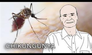 Alerta: Precisamos falar sobre Chikungunya!