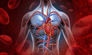 Sinais de Artérias Bloqueadas Que Podem Ocasionar Doenças Cardíacas