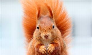 O que seria da natureza sem esses lindos esquilos?