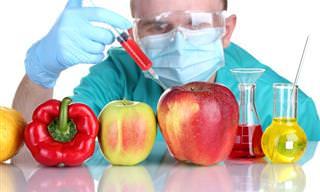 10 Novos Alimentos Geneticamente Modificados